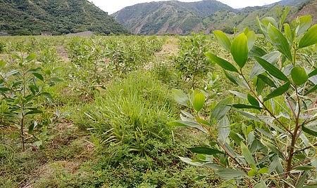 El aporte de materia orgánica al suelo
